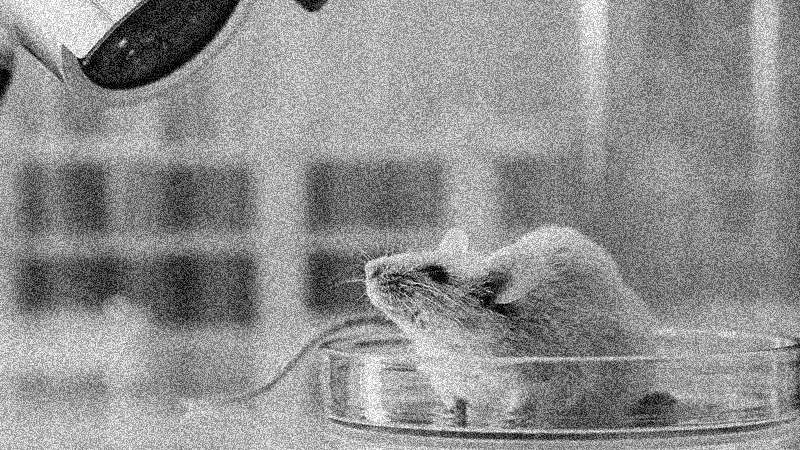 Test medicine on animals, not people